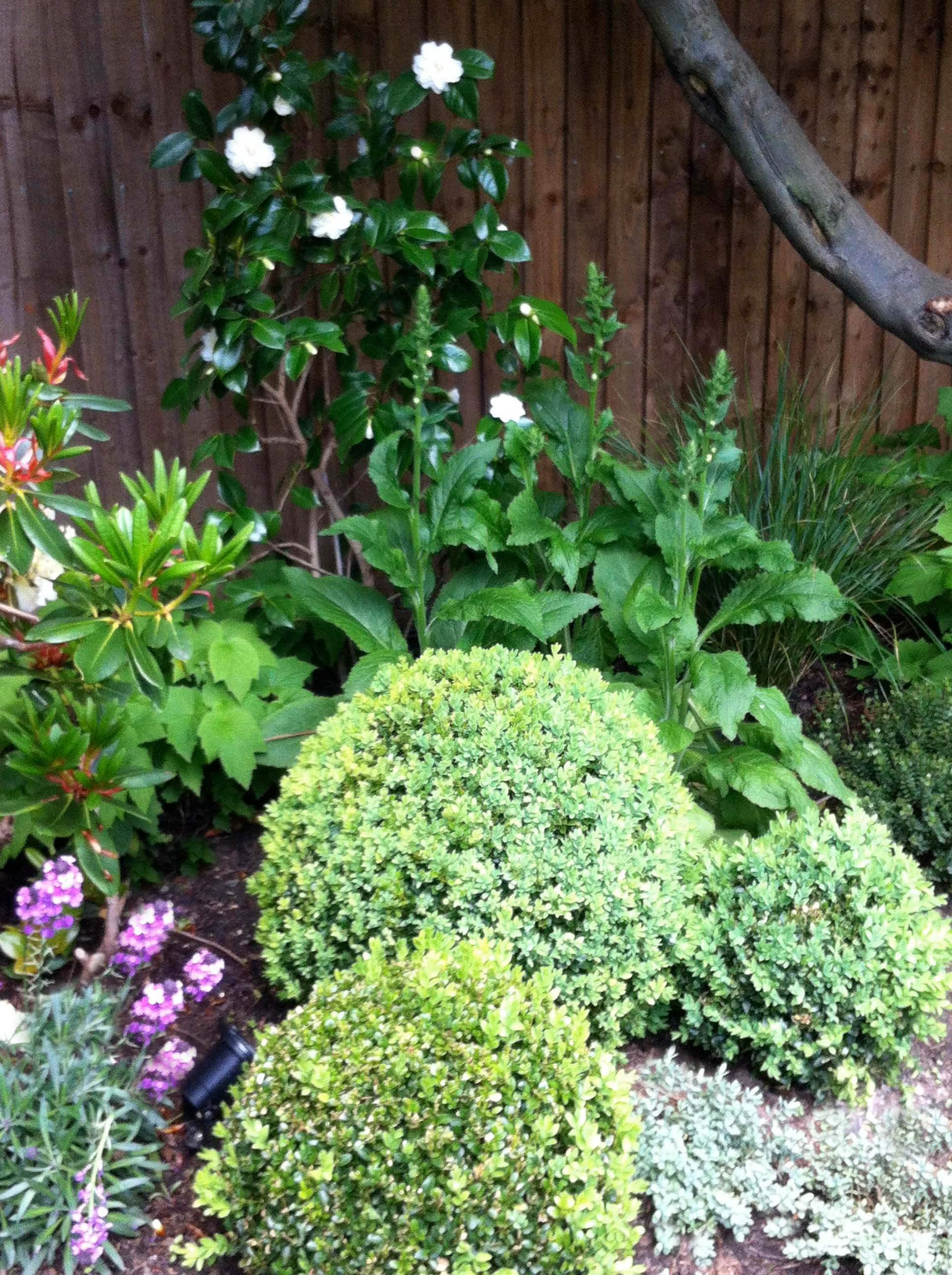 Pippa s family garden outer space garden design for Outer garden
