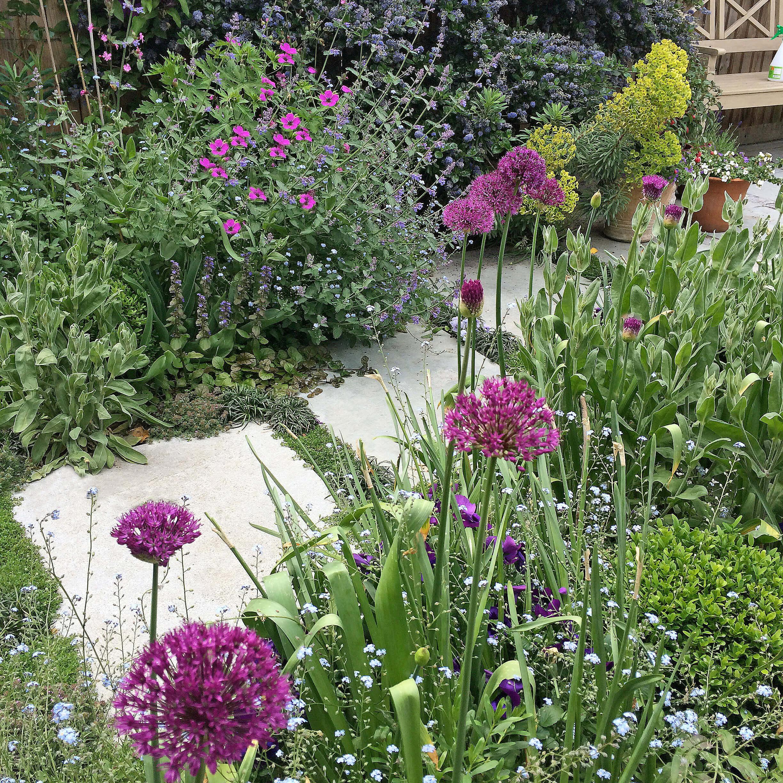Celia s cottage garden outer space garden design for Outer space garden design clevedon