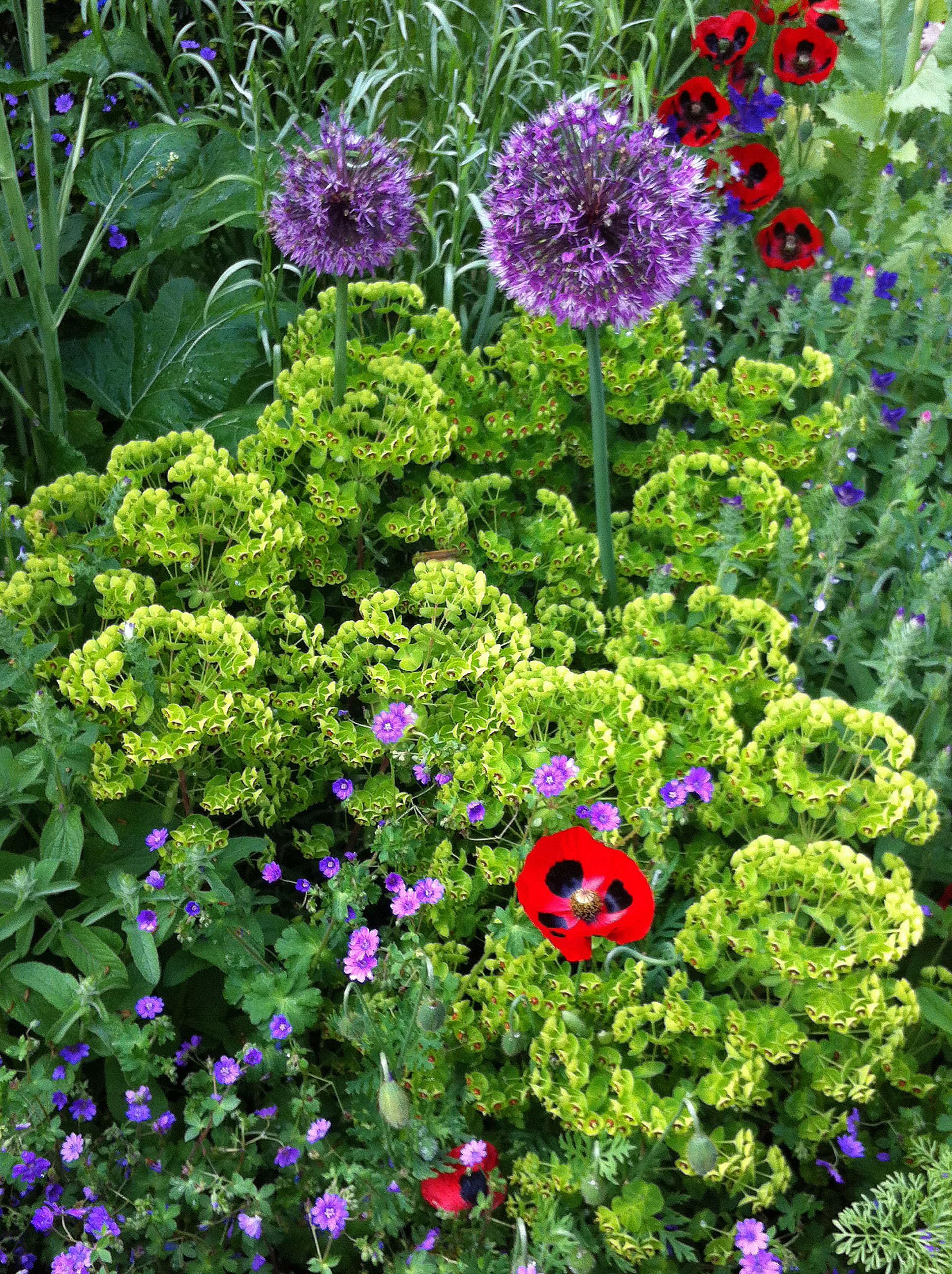 Eleaner and philip s garden outer space garden design for Outer space garden design clevedon