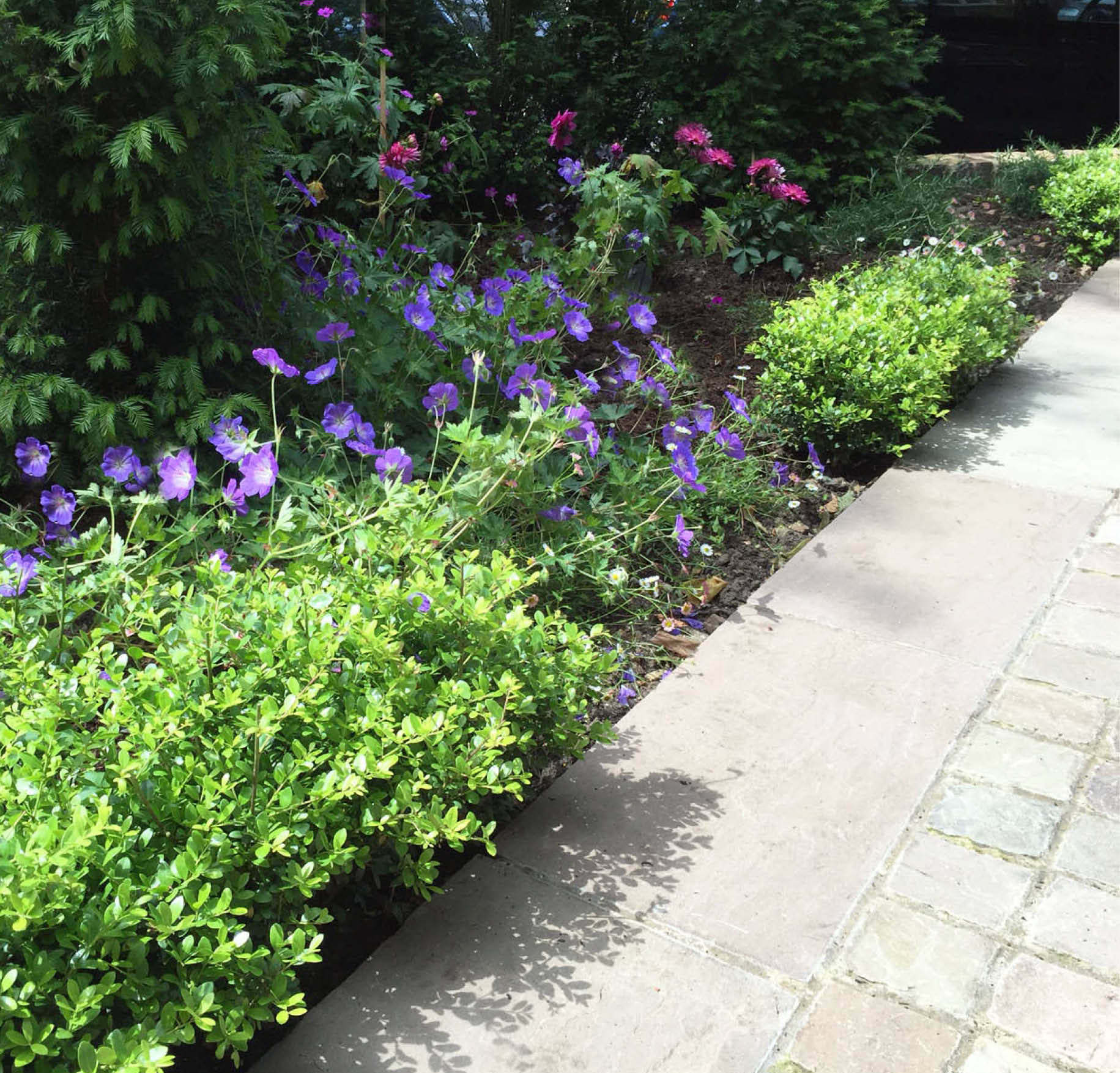 Patricia and Paul's Front Garden 3