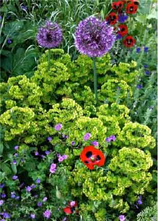 Eleaner and Philip's garden