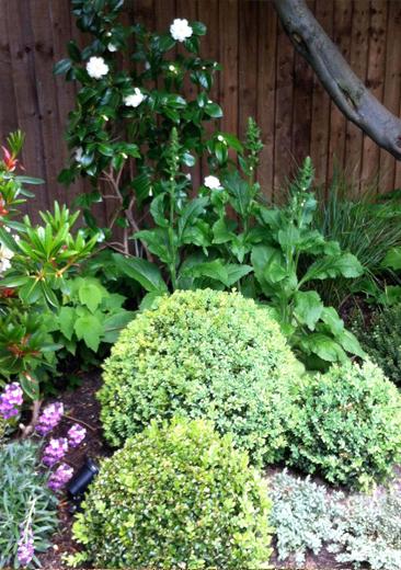 Pippa's Family Garden