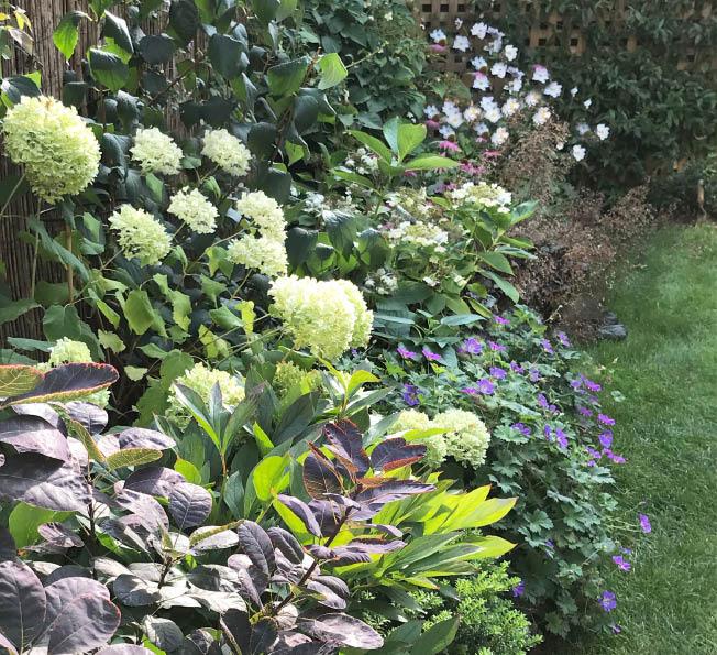 Taz and Rob's garden2