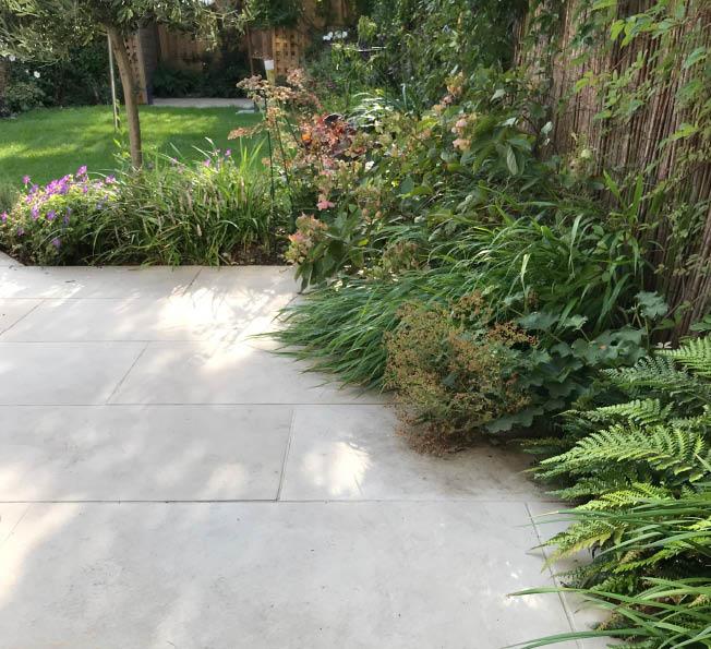 Taz and Rob's garden3